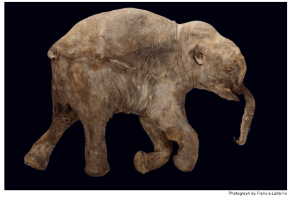 http://ngm.nationalgeographic.com/2009/05/mammoths/latreille-photography