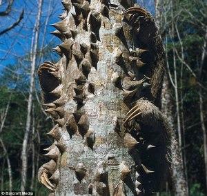 Perezoso tras un tronco
