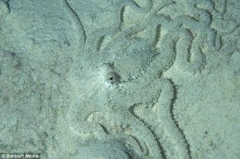 Pulpo en la arena