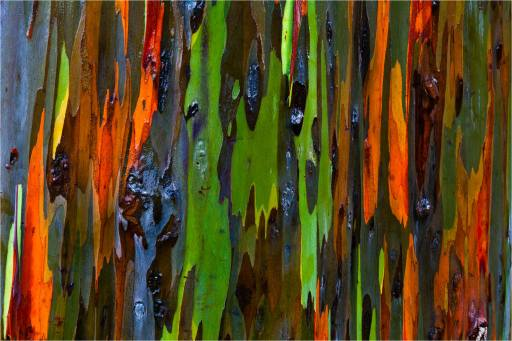 bark-abstract-c2a9-2011-christopher-martin-23421