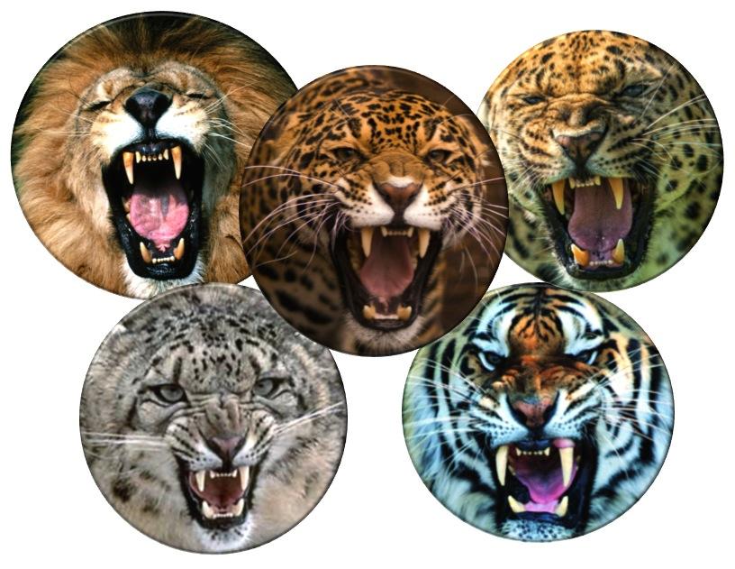 Cinco grandes felinos, y no más – BioStreet
